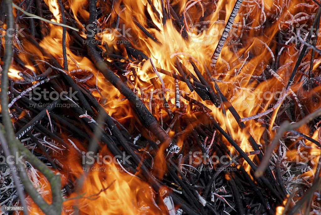 Branches on a campfire royalty-free stock photo