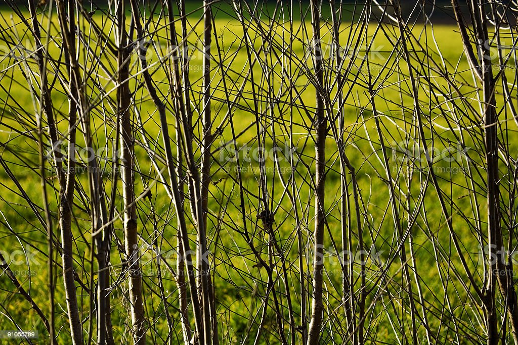 Branches on green royalty-free stock photo
