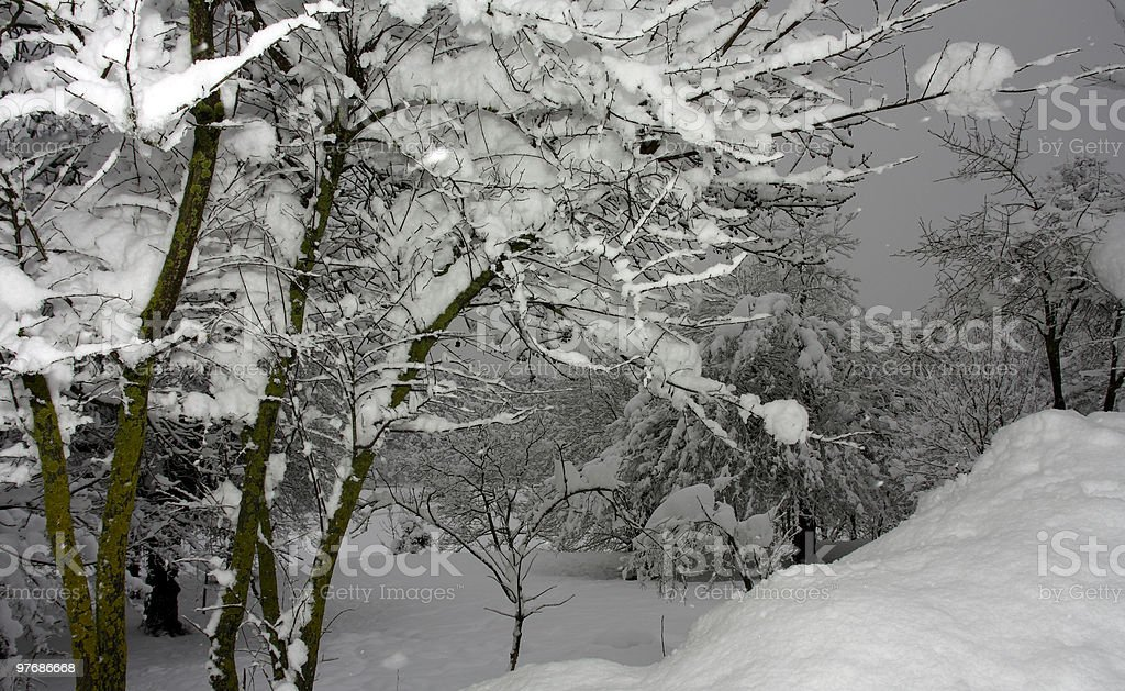 Branches royalty-free stock photo