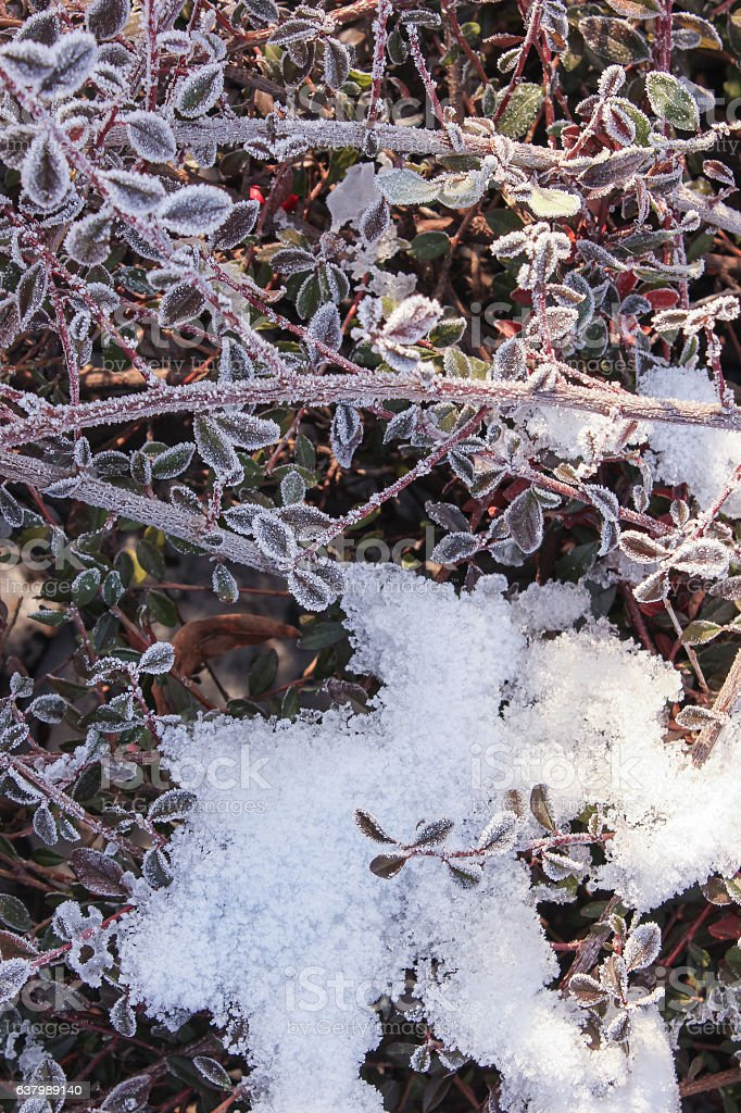 branches plants covered with ice stock photo