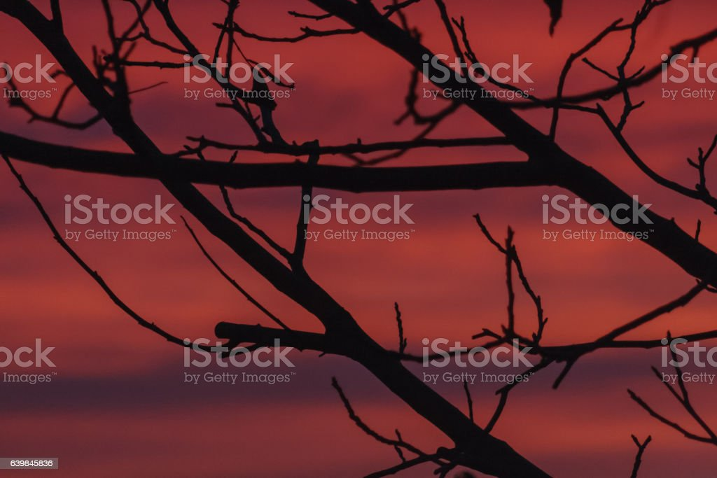 Branches silhouette against red sky of sunrise stock photo