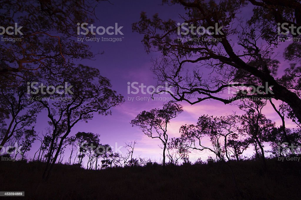 Branches Silhouette. royalty-free stock photo