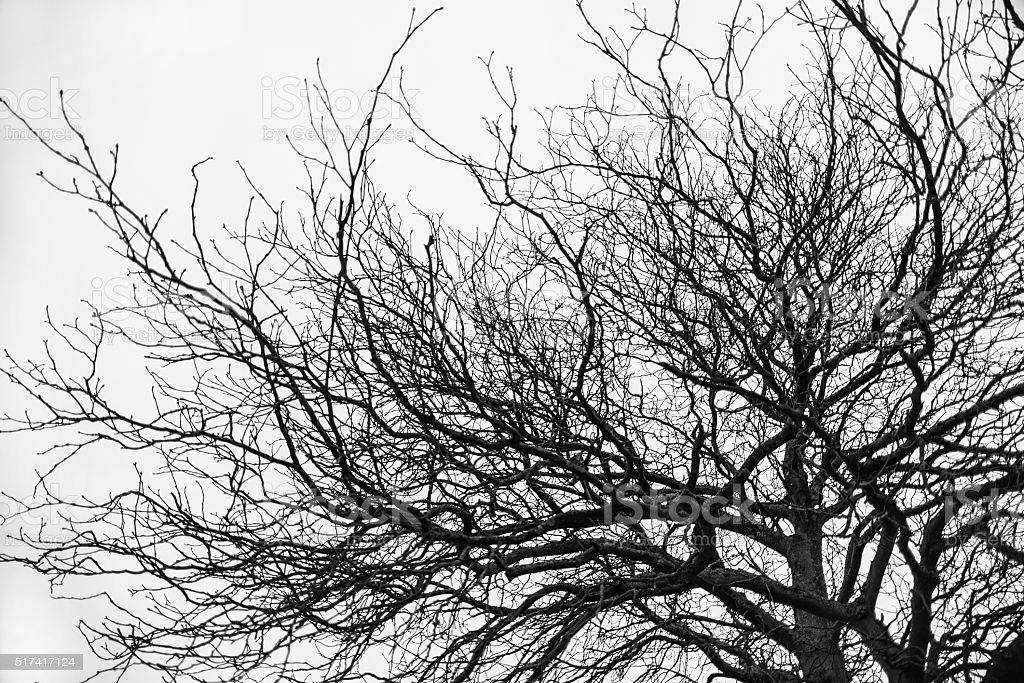 Branches under the sky stock photo