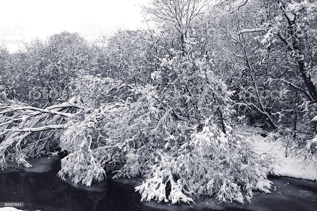 Branches, weighed down by snow, dip into an icy stream. stock photo