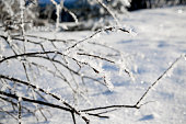 branches with frost in winter