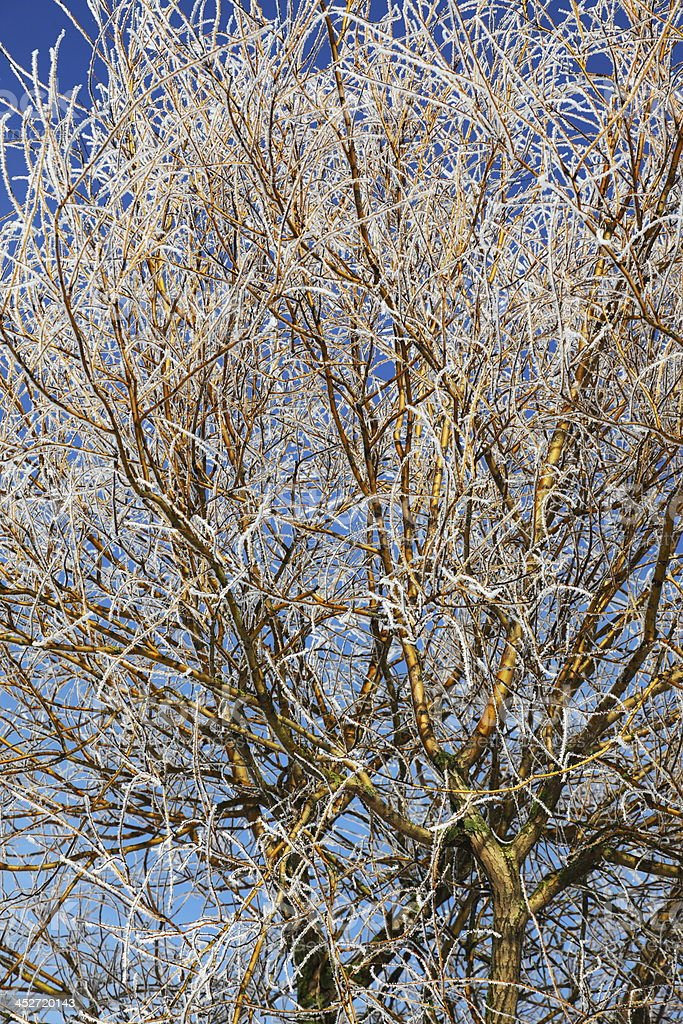 Branches with hoar frost on blue sky stock photo