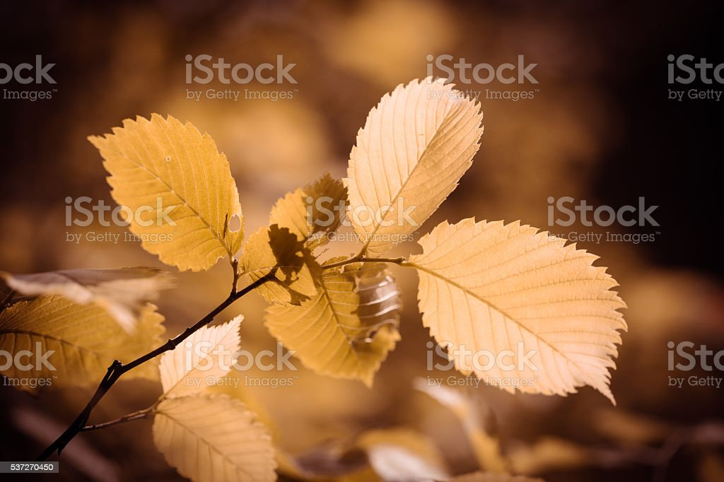 branches with leaves close-up stock photo