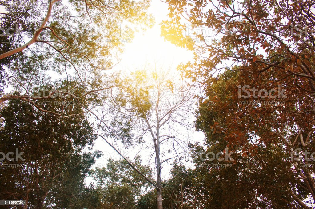 Branches with light during the day. stock photo