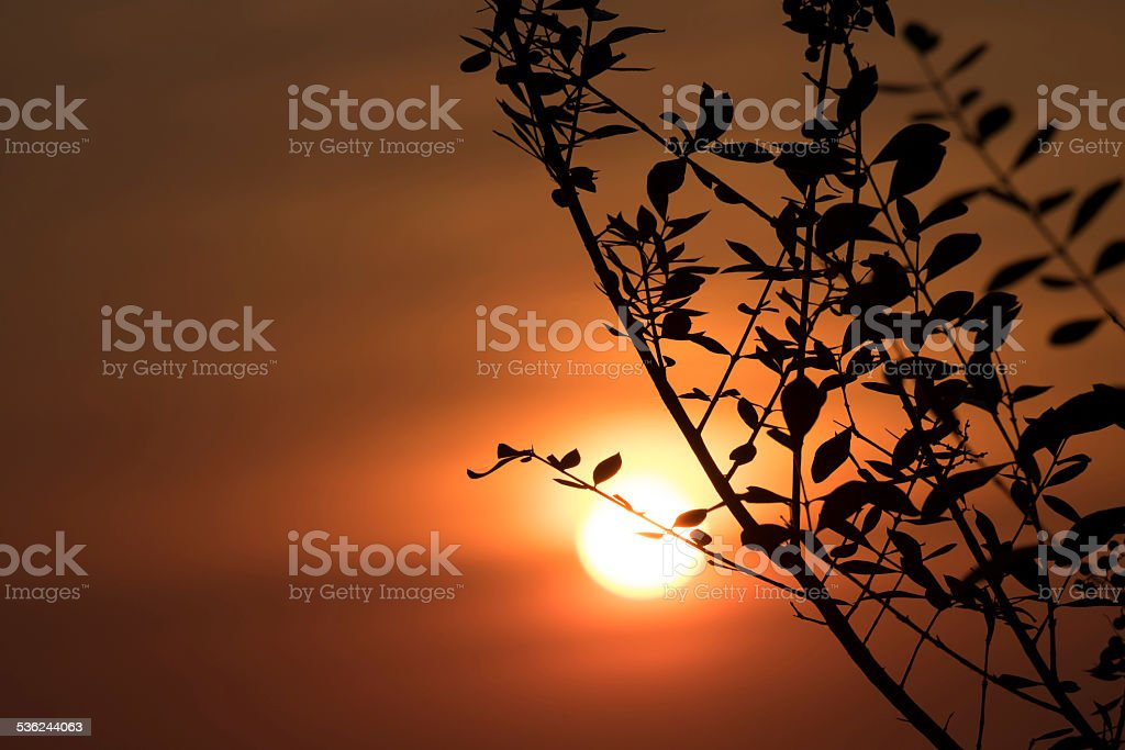 Branches with little leaves in front of sunset sky stock photo