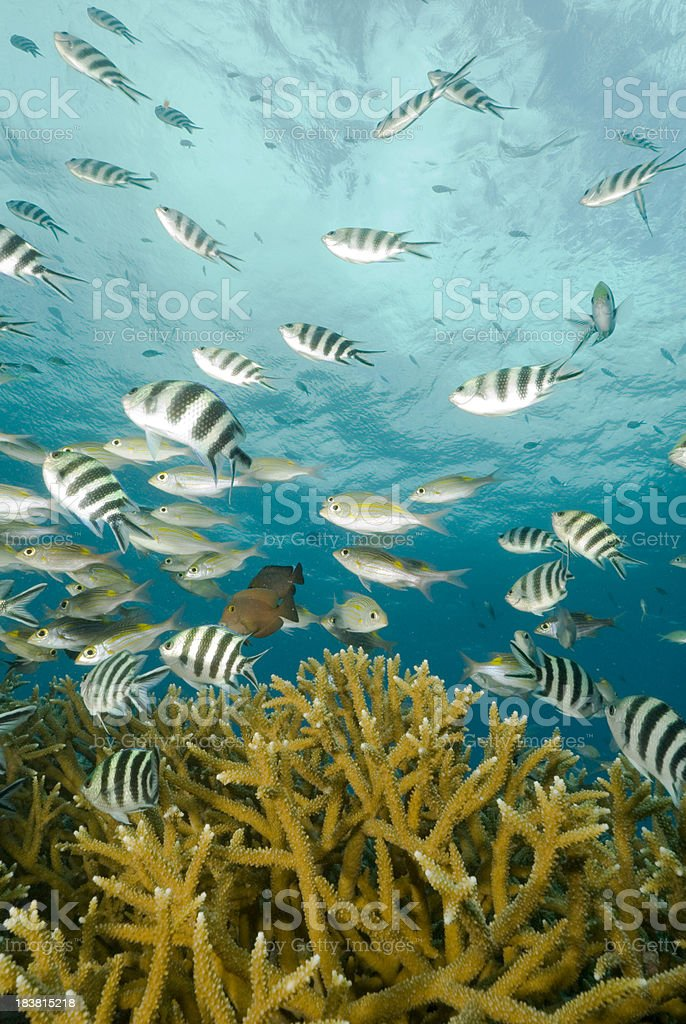 branching coral and fish stock photo