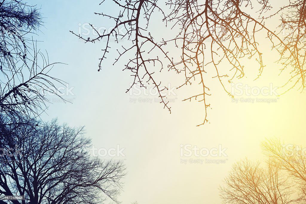 Branchy Background royalty-free stock photo