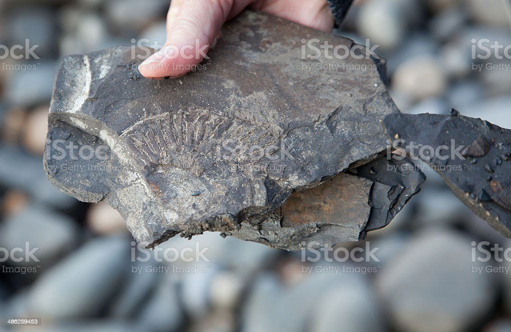 Brand new fossil stock photo