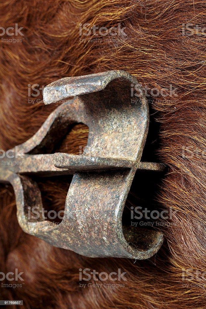 Branding Iron on Cow Hair stock photo
