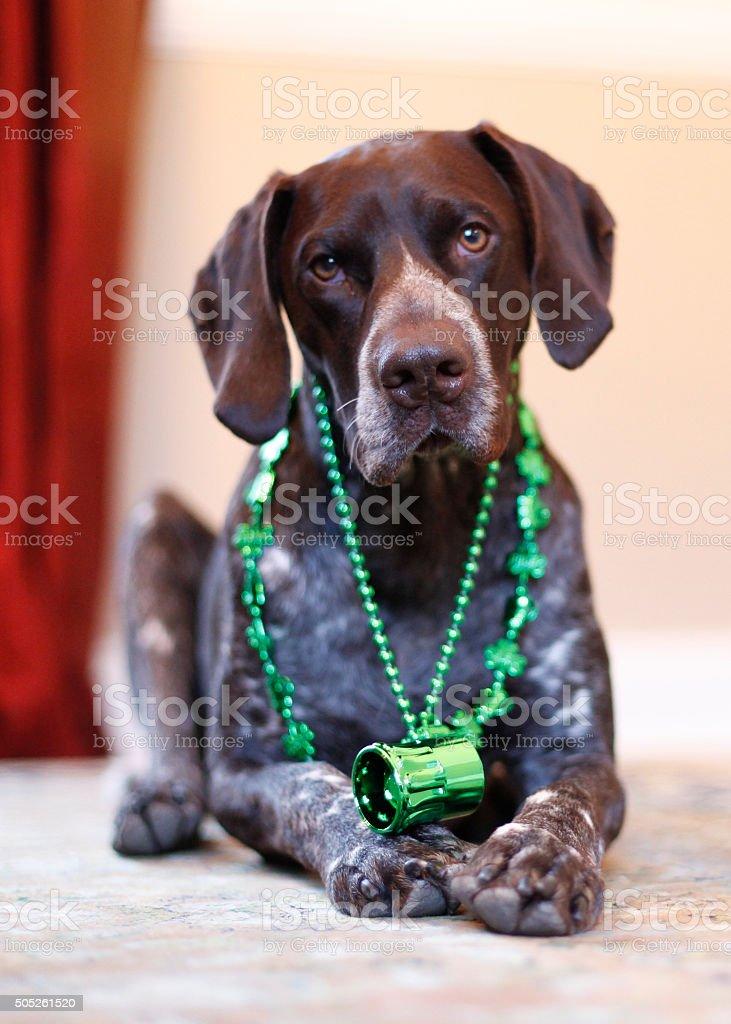 Branston celebrates St Patricks Day stock photo