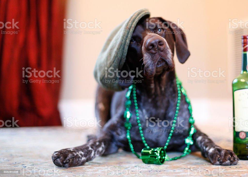 Branston celebrates the luck of the Irish stock photo