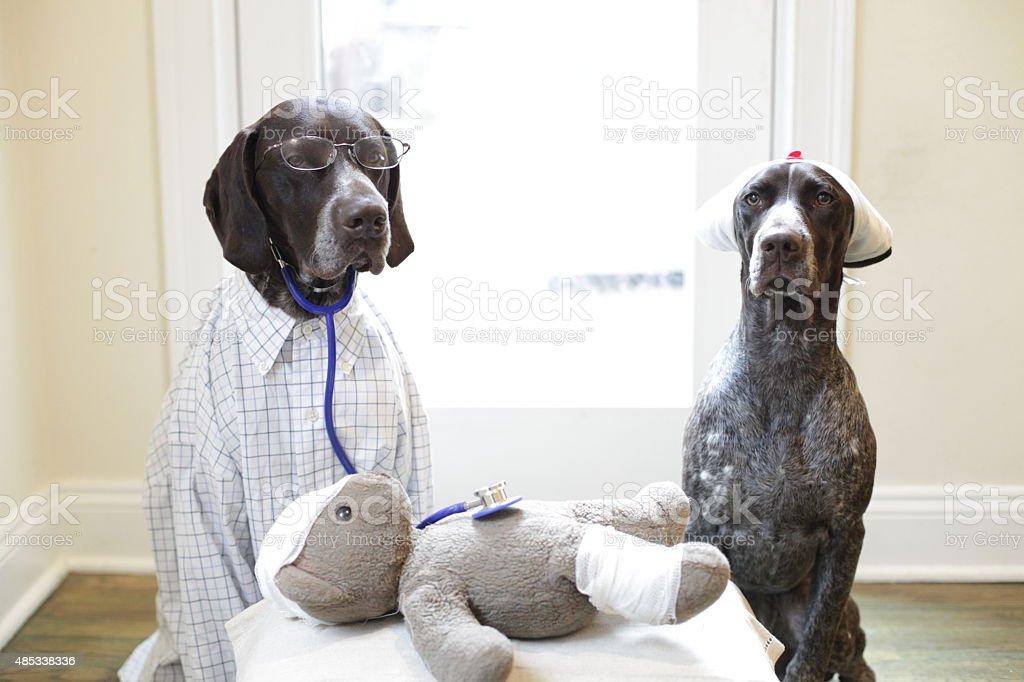 Branston MD and Twiglet examine Teddy stock photo
