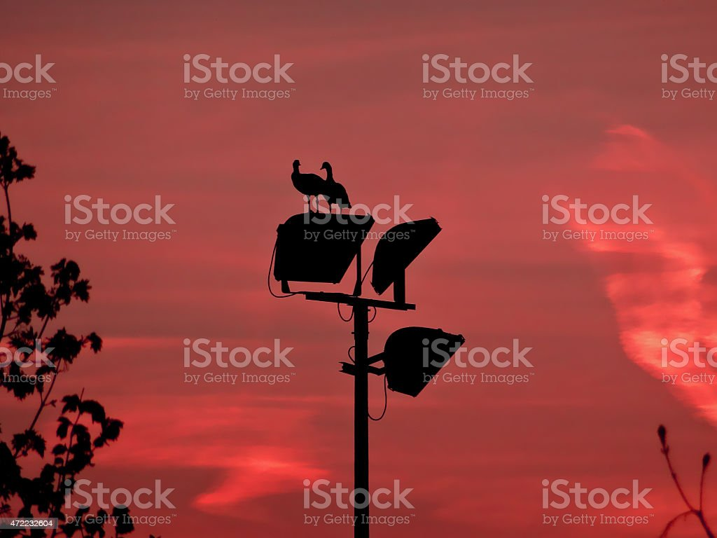 Brant wild geese silhouette with dramatic sky stock photo