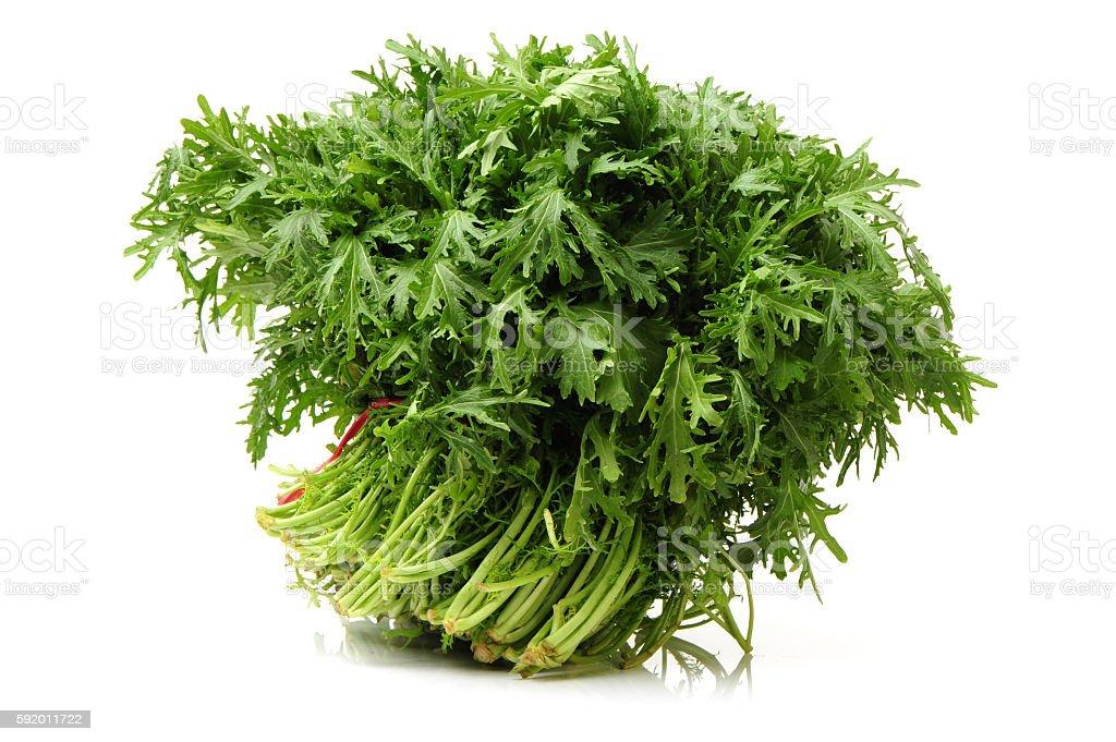 Brassica juncea stock photo