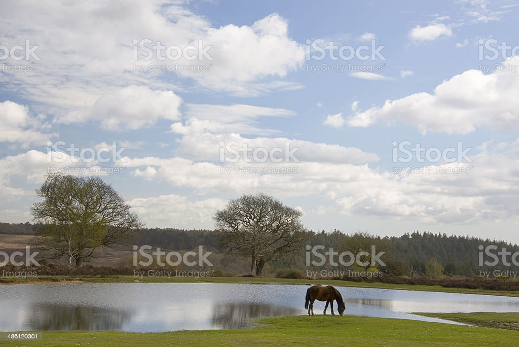 Bratley View, New Forest royalty-free stock photo