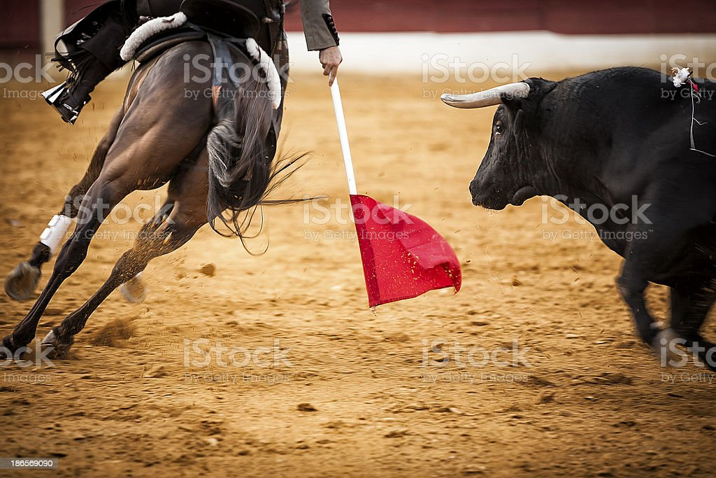 brave bull chasing horse during a bullfight, Spain stock photo