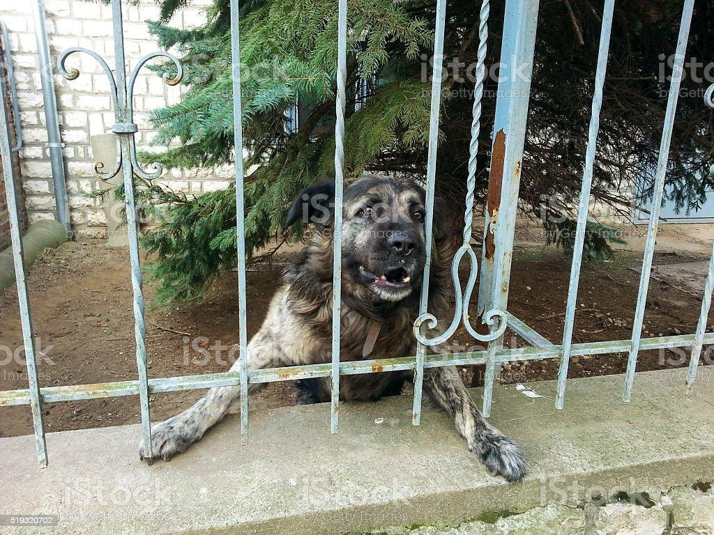 Brave dog stock photo