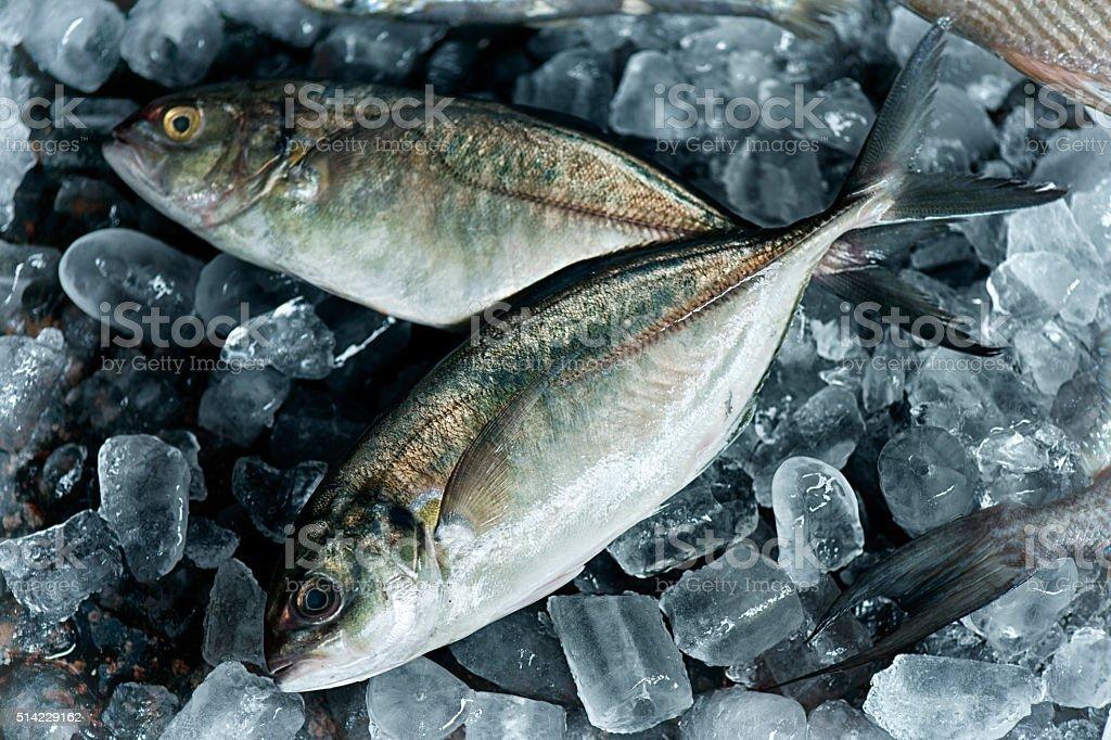 Brazilian carapau fish or horse mackerel stock photo