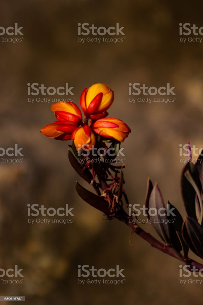 Brazilian Cerrado Vegetation (Brazilian Savanna) stock photo