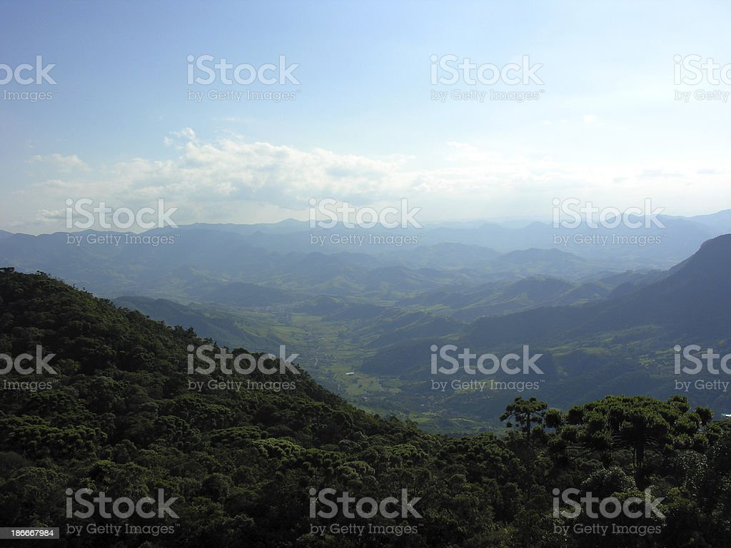 Brazilian forest near CAMPOS DO JORDAO city royalty-free stock photo