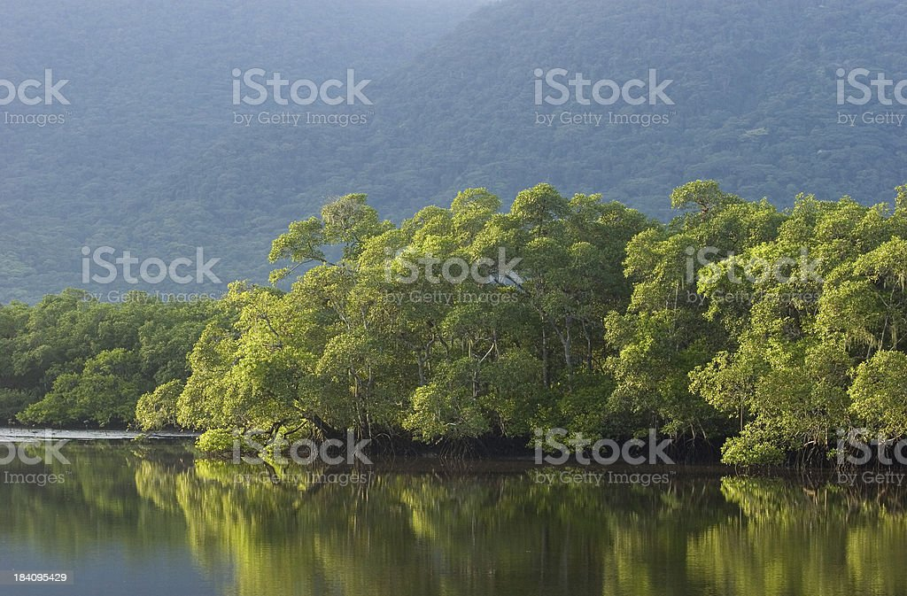 Brazilian Rainforest stock photo
