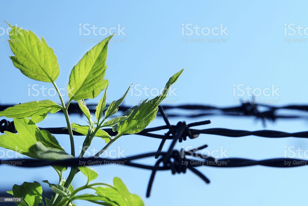 breach of prison royalty-free stock photo