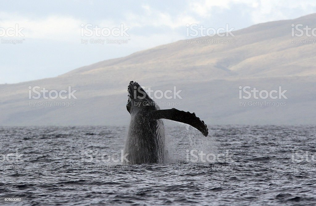 Breach Sequence 1 of 6 royalty-free stock photo