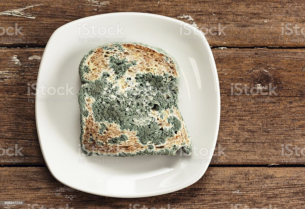 Bread slice smothered by blue mould on weathered wooden surface stock photo