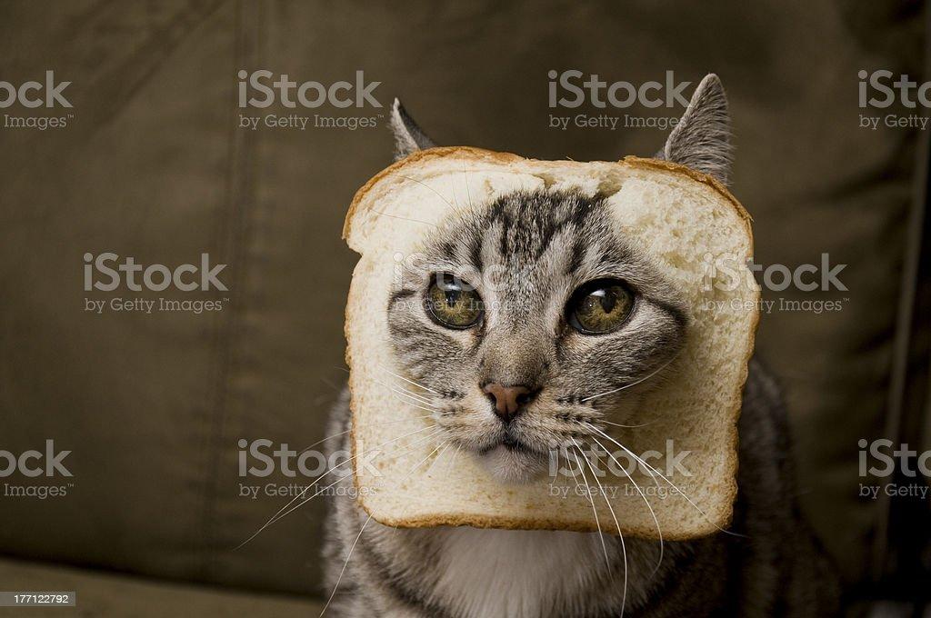 Breaded Cat stock photo