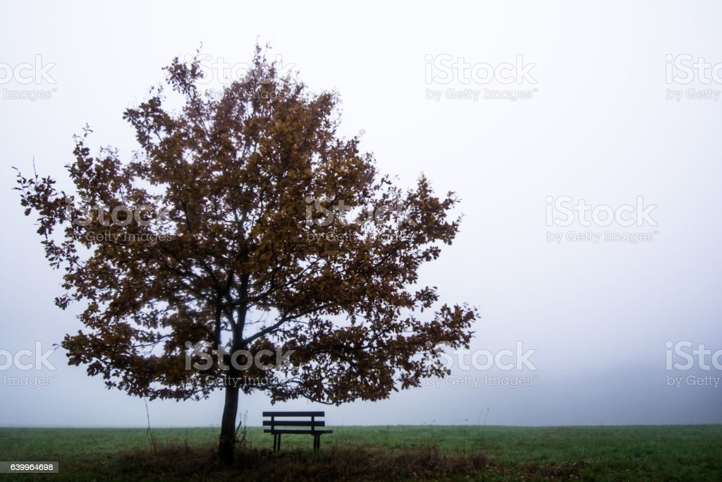Pause im Nebel stock photo