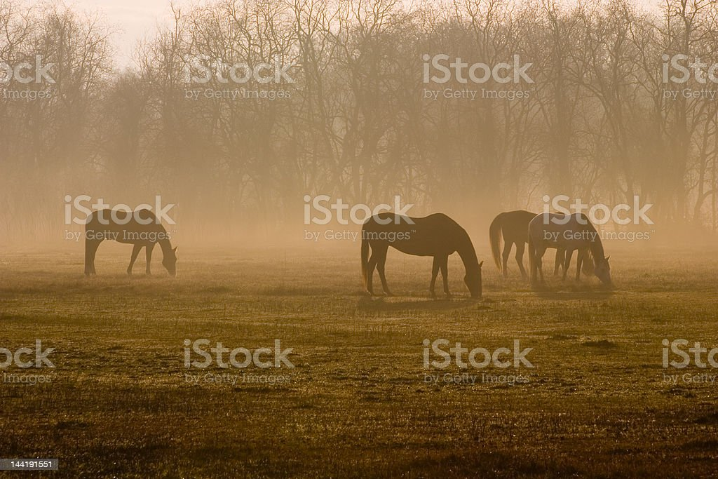 Breakfast at Dawn royalty-free stock photo