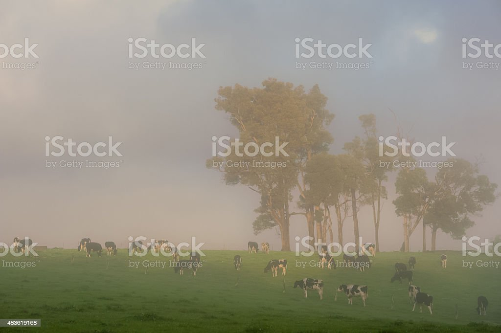 Breakfast in the Fog stock photo