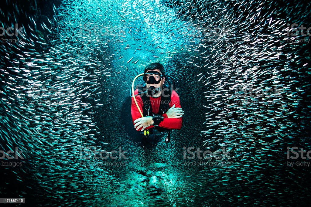 Breaking the school of fishes stock photo