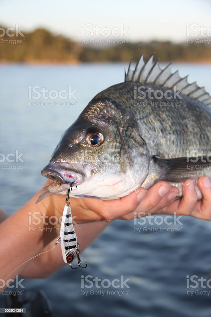 Bream with lure stock photo