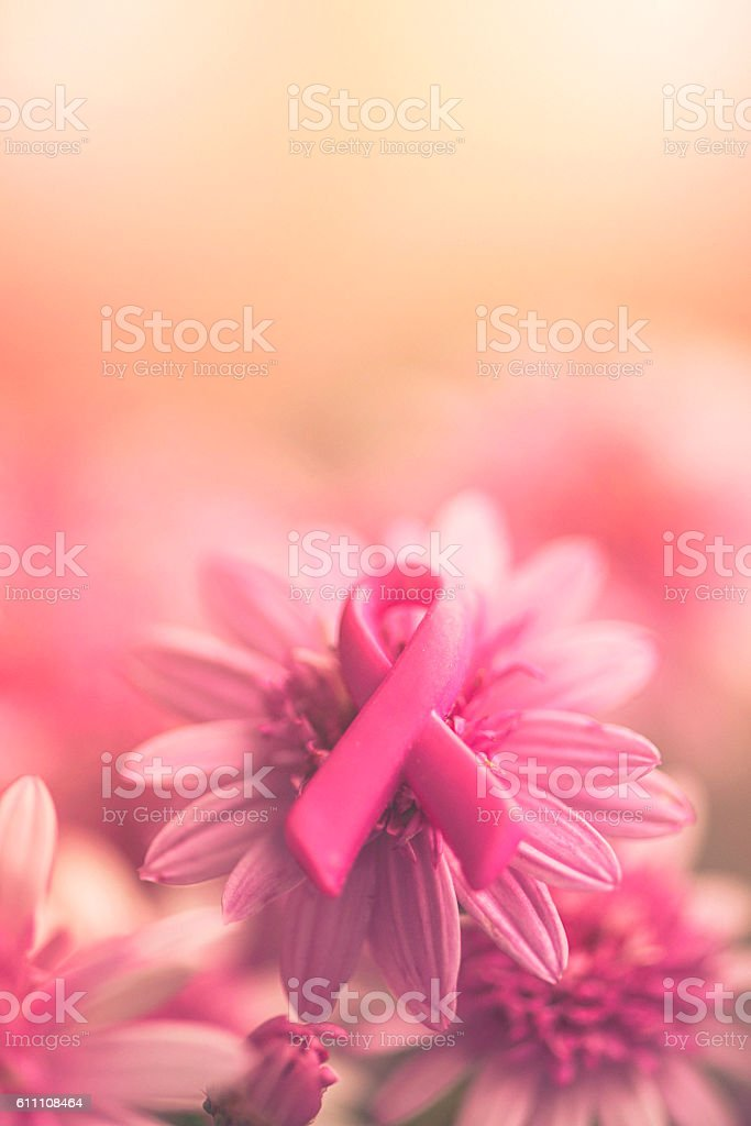 Breast Cancer Awareness ribbon on pink flowers with soft background stock photo