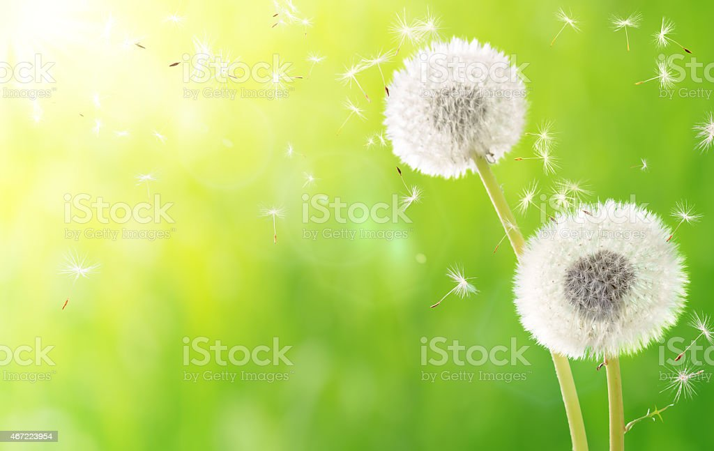 breath of spring - new life and allergy stock photo