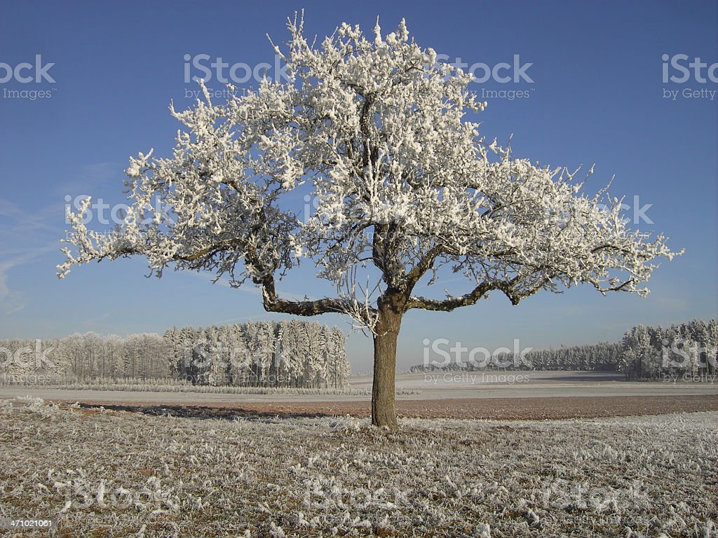 breath of the winter royalty-free stock photo