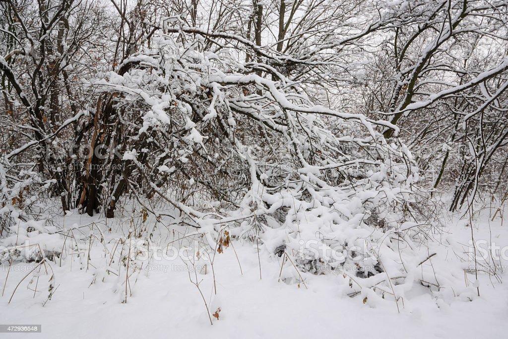 Aire de invierno foto de stock libre de derechos