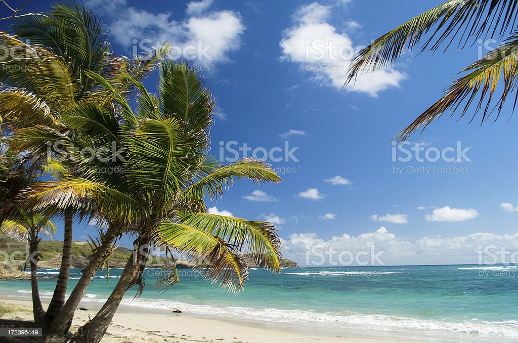 breathtaking beach and palm trees stock photo