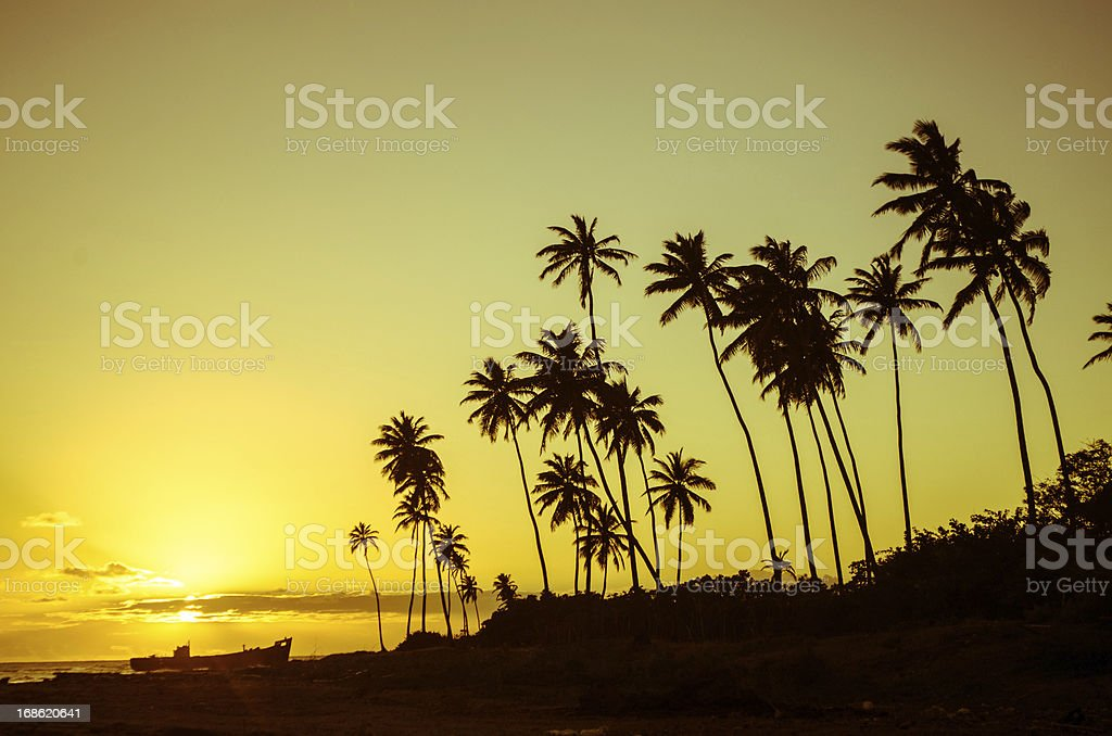 breathtaking exotic landscape with palm trees royalty-free stock photo