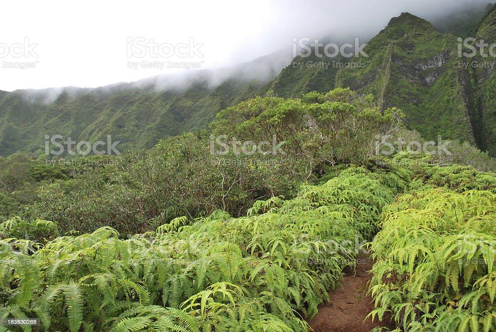Breathtaking Hiking Trail in Hawaii royalty-free stock photo
