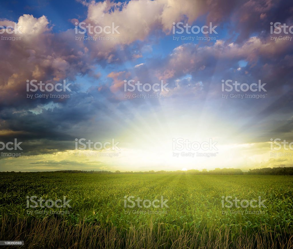 Breathtaking Midwest Sunset Over Corn Field stock photo