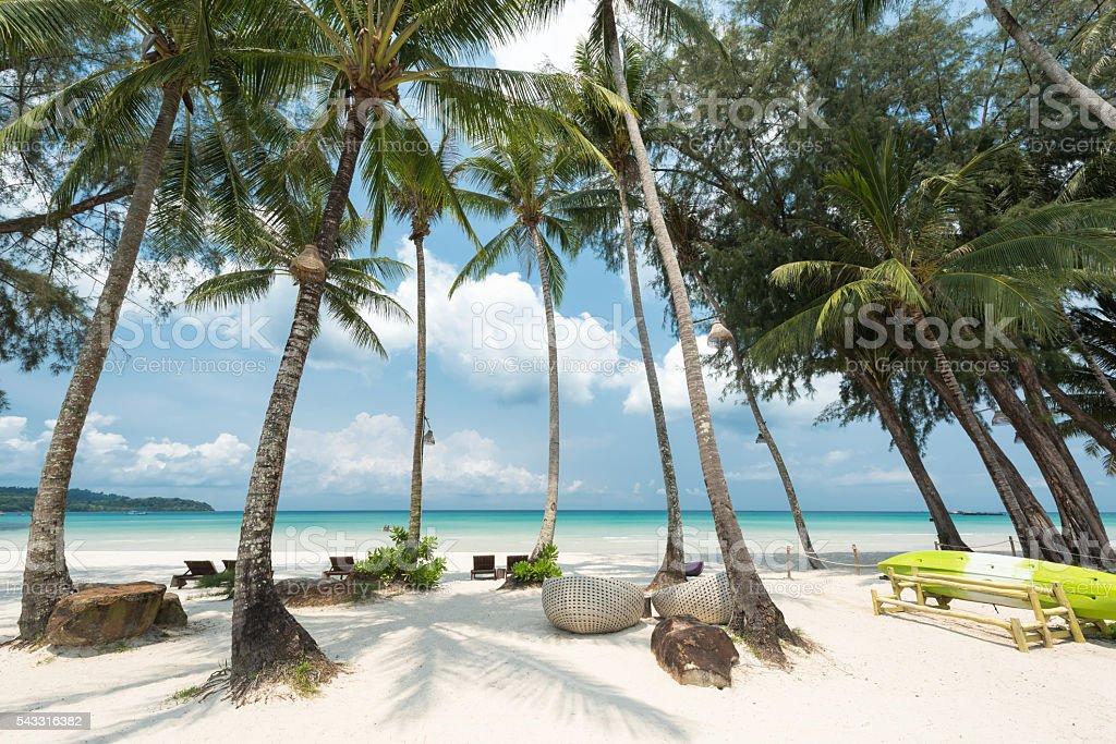 Breathtaking white sandy with coconut palm tree stock photo
