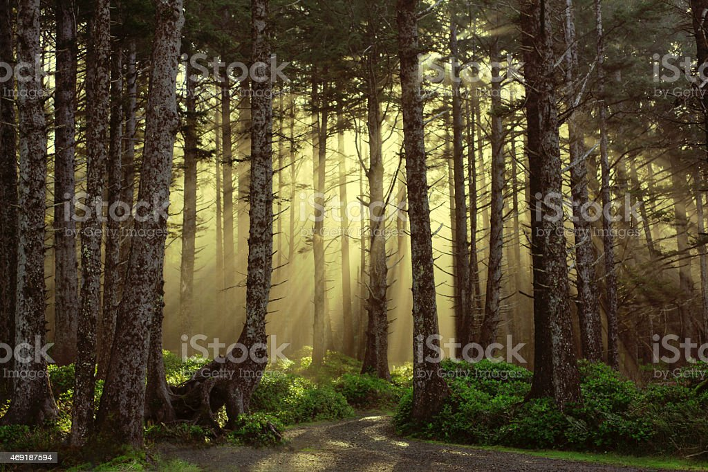 breathtaking woods beautiful golden lit forest of trees stock photo
