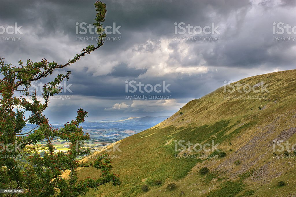 Brecon Beacons Berries stock photo