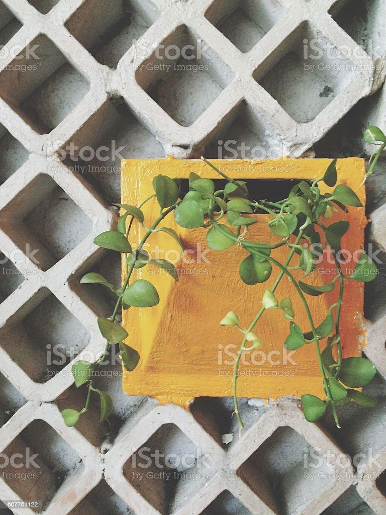 Breeze concrete block with yellow plant pot stock photo